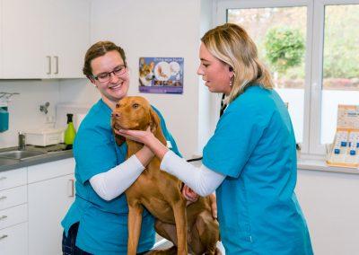 Behandlung-Ohrenkontrolle-Hund